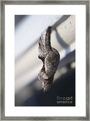 Waiting To Fly Viii Framed Print by Mandy Shupp