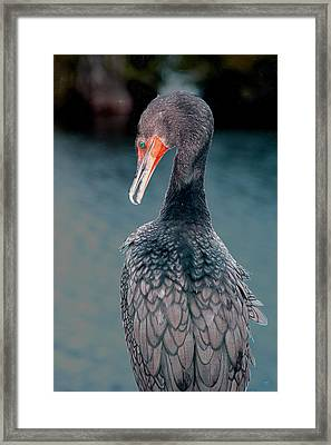 Waiting Framed Print by William Feig
