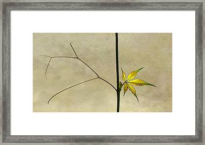 Wake Up Framed Print by Jutta Kerber