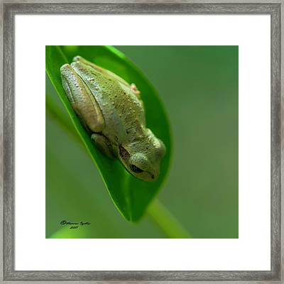 Wake Up Time Framed Print by Marvin Spates