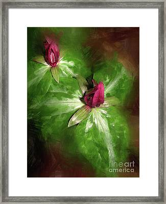 Wakerobins In The Forest Framed Print by Judi Bagwell