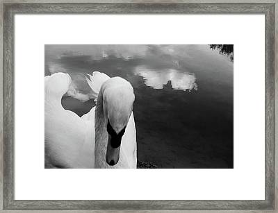 Waking Dreams Framed Print