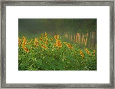 Waking Up Framed Print by CR Courson