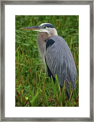 Framed Print featuring the photograph Wakodahatchee Wetlands Bird by Juergen Roth