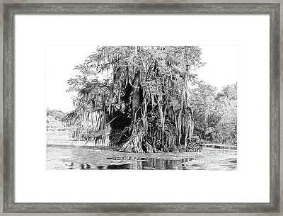 Wakulla Framed Print