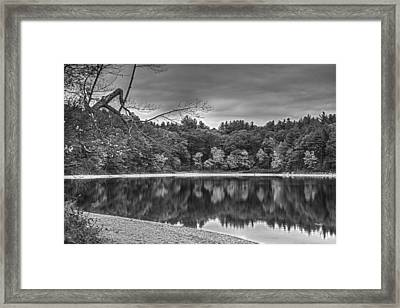 Walden Pond Fall Foliage Concord Ma Black And White Framed Print