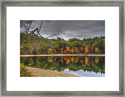 Walden Pond Fall Foliage Concord Ma Framed Print