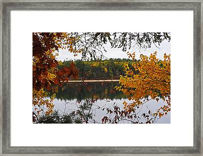 Walden Pond Fall Foliage Leaves Concord Ma Framed Print