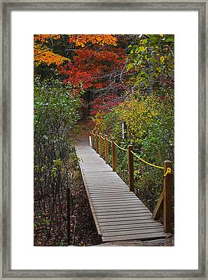 Walden Pond Footbridge Concord Ma Framed Print by Toby McGuire