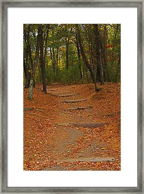 Walden Pond Path Into The Forest Framed Print