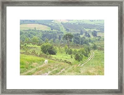 Walk In Ashdown Forest Framed Print by Hilary Burt
