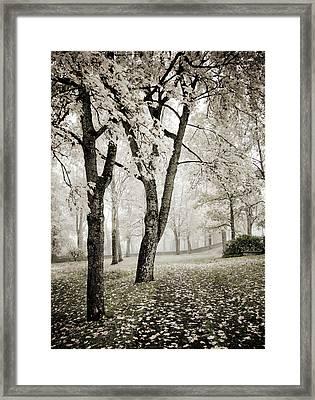 Walk In The Park Encore  Framed Print
