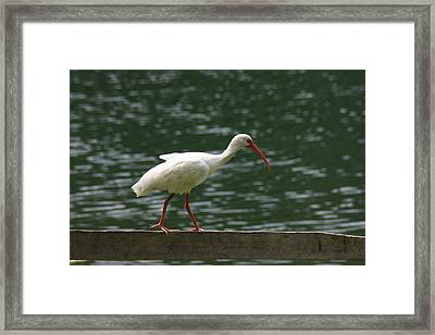 Walk In The Park Framed Print by Michael Albright