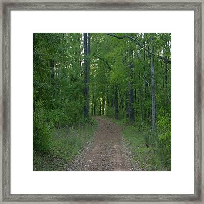 Walk In The Woods Framed Print by Carla Fionnagain