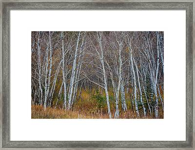 Framed Print featuring the photograph Walk In The Woods by James BO Insogna