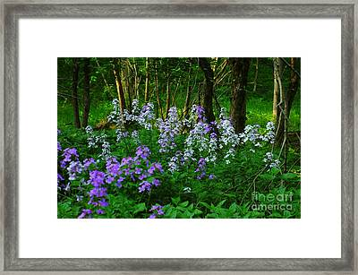 Walk In The Woods Framed Print by Kathleen Struckle