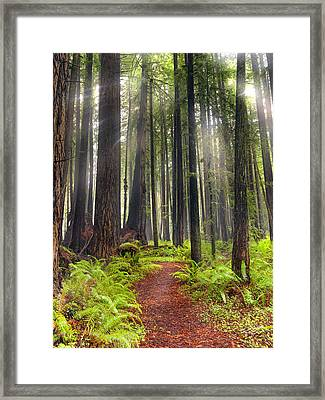 Walk In The Woods Framed Print by Leland D Howard