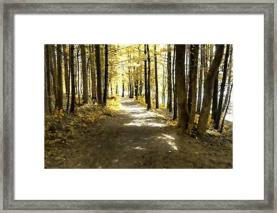 Walk In The Woods Framed Print by Sharon Popek