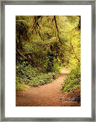 Walk Into The Forest Framed Print by Carol Groenen