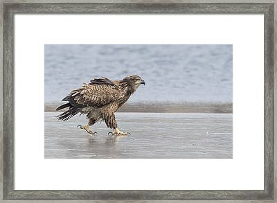 Walk Like An Eagle Framed Print