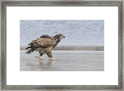 Walk Like An Eagle Framed Print