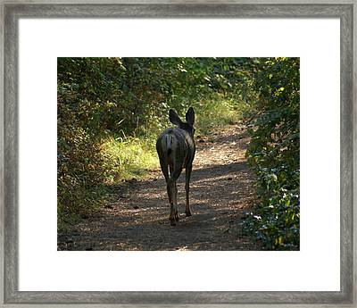 Walk On Framed Print
