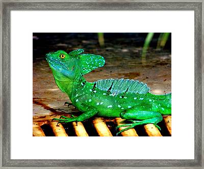 Walk On Water Framed Print by Karen Wiles