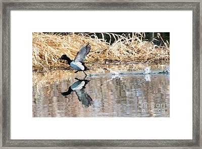 Walk On Water Framed Print by Mike Dawson