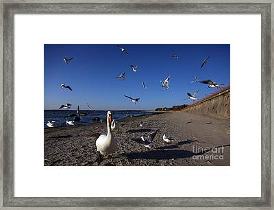 Walk Framed Print by Vadim Grabbe