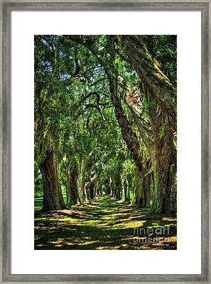 Framed Print featuring the photograph Walk With Me Avenue Of Oaks St Simons Island Art by Reid Callaway
