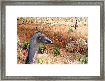 Walkabout Framed Print by Holly Kempe