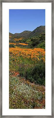 Framed Print featuring the photograph Walker Canyon Poppies by Cliff Wassmann