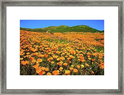 Walker Canyon Wildflowers Framed Print