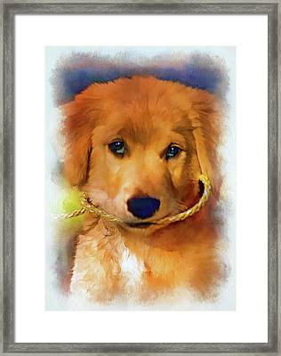 Walkies...pleeease - Paint 2 Framed Print by Steve Harrington