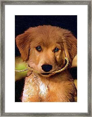 Walkies...pleeease Framed Print by Steve Harrington