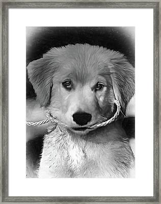 Walkies...pleeease - Vignette Framed Print by Steve Harrington