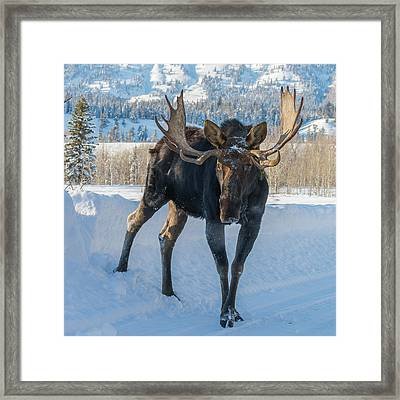 Walkin' The Road Framed Print