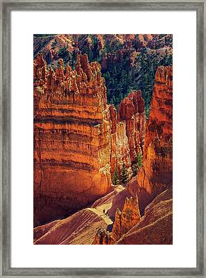 Walking Among Giants Framed Print