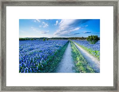 Walking In A Bluebonnet Field - Texas Framed Print