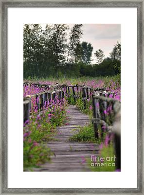 Walking In Magic... Framed Print