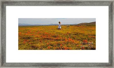 Walking In Poppies Framed Print