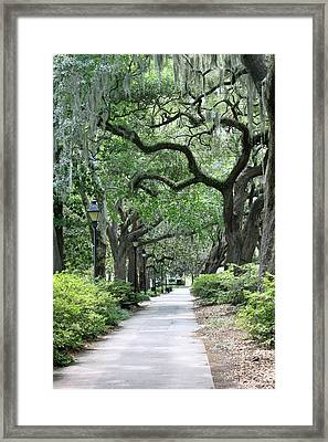 Walking In The Park Framed Print