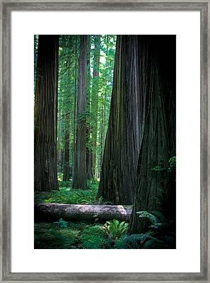 Walking In The Redwoods Framed Print by Jonathan Hansen