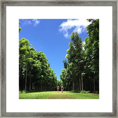 Walking Into The Woods Framed Print