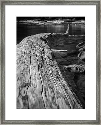 Walking On A Log Framed Print