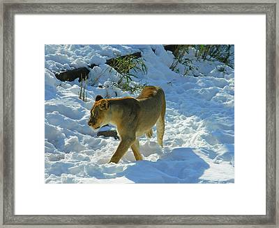 Walking On The Wild Side Framed Print by Emmy Marie Vickers