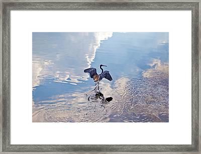 Walking On Water Framed Print by Carolyn Marshall