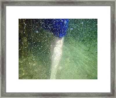 Walking Framed Print by Renata Vogl