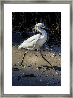 Walking Tall Framed Print by Marvin Spates