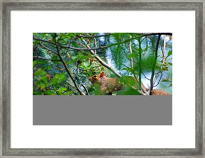 Walking The Branches Framed Print by Peter  McIntosh